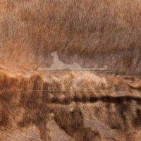 Каракуль Broadtail Коньяк