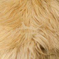 Коза (Як) 'блонд №1'