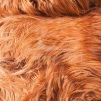 Коза (Як) 'коричневая'