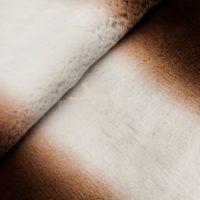 рекс белый центр коричневые бока стриженный