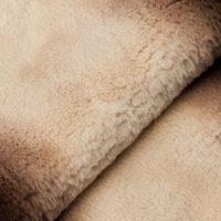 рекс бежевое де-граде (коричневые бока) стриженный